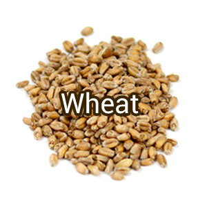 Солод Wheat, пшеничный (базовый), Soufflet Россия 1кг